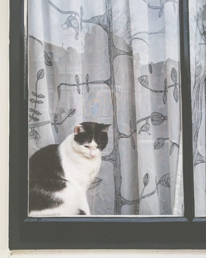 amsterdam cats