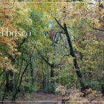 Il richiamo del bosco – relax nei Boschi di Carrega