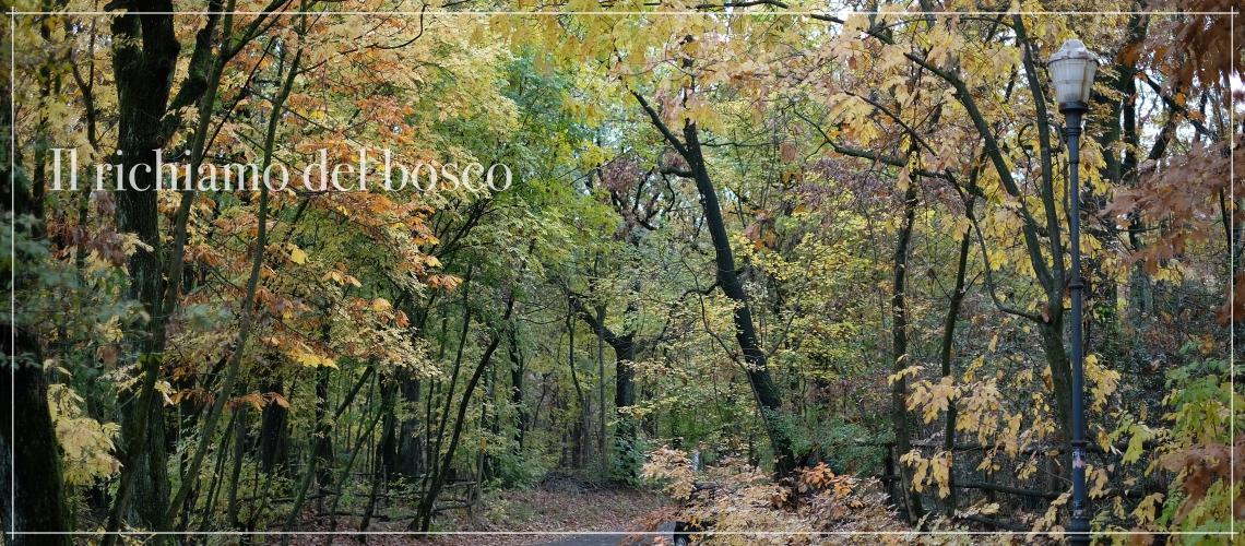 Il richiamo del bosco - relax nei Boschi di Carrega